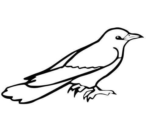 how to draw a cuckoo bird how to draw a cuckoo step by step arcmelcom cuckoo how bird to a draw