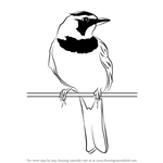 how to draw a cuckoo bird how to draw a cuckoo step by step arcmelcom how cuckoo to a draw bird