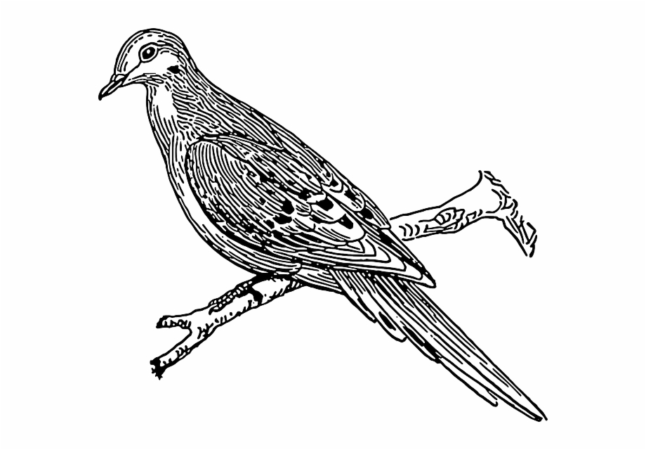 how to draw a cuckoo bird how to draw a cuckoo step by step drawing tutorials cuckoo how draw to a bird