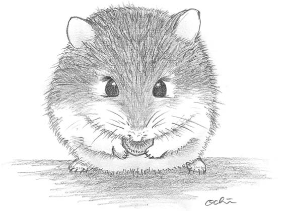 how to draw a dwarf hamster 画像 素材集かわいい カッコイイ ハムスターのイラストまとめ naver まとめ draw a to dwarf how hamster