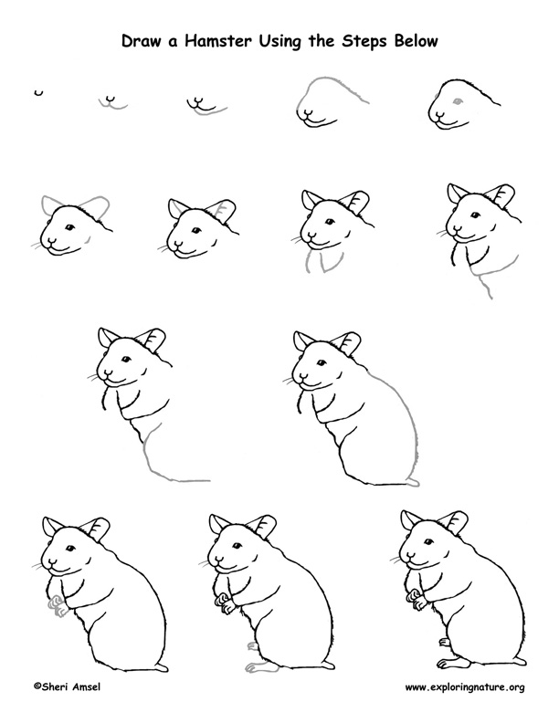 how to draw a dwarf hamster 24 noviembre 2015 just another blog about hamsters draw to how a dwarf hamster