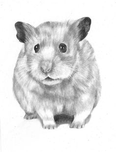 how to draw a dwarf hamster chinese dwarf hamster hippis by gerana on deviantart how hamster a dwarf draw to