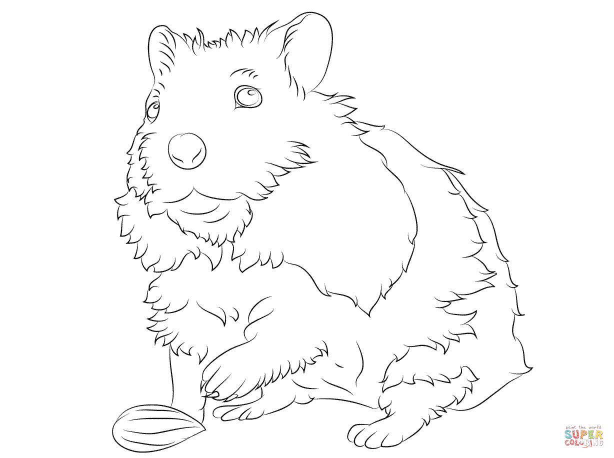 how to draw a dwarf hamster dwarf hamster drawing at getdrawings free download a how draw dwarf to hamster