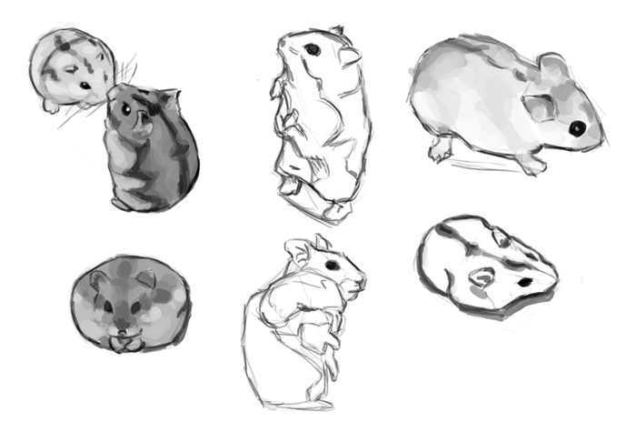 how to draw a dwarf hamster dwarf hamster drawing at getdrawings free download dwarf a hamster draw how to