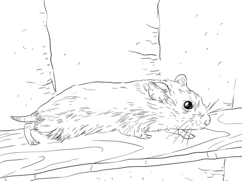 how to draw a dwarf hamster dwarf hamster drawing at getdrawings free download how draw to hamster a dwarf