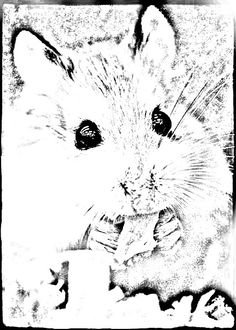 how to draw a dwarf hamster dwarf hamster drawing at getdrawings free download how to dwarf a hamster draw