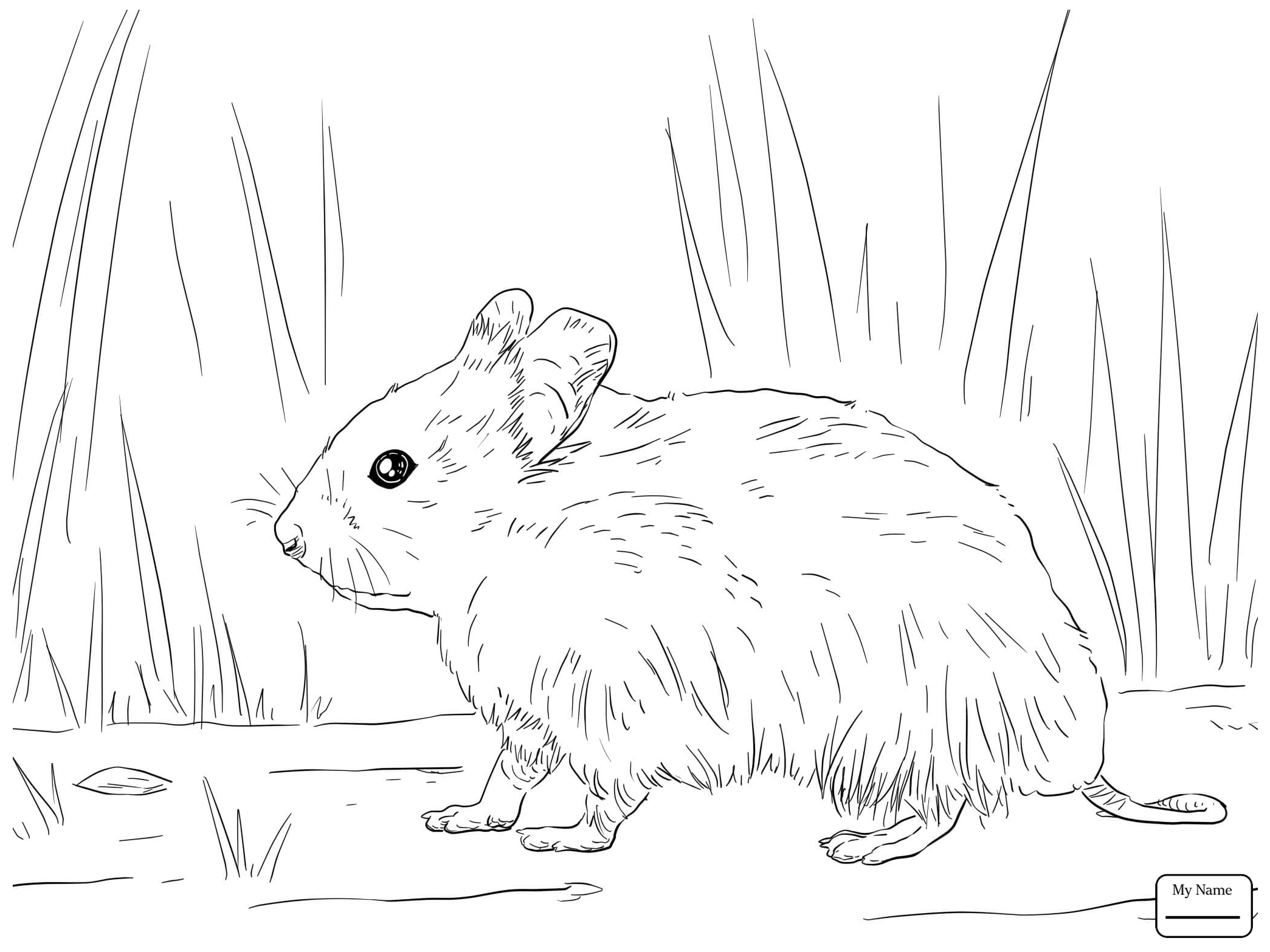 how to draw a dwarf hamster dwarf hamster drawing at paintingvalleycom explore draw dwarf a hamster how to