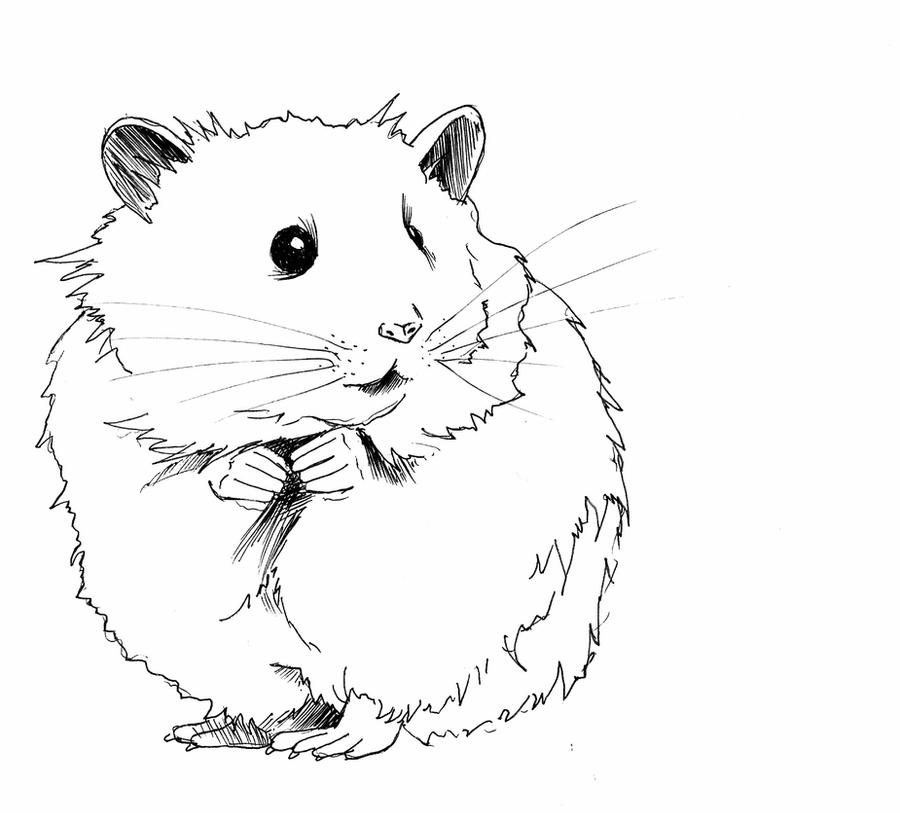 how to draw a dwarf hamster hamster by masterlen on deviantart to how a draw hamster dwarf