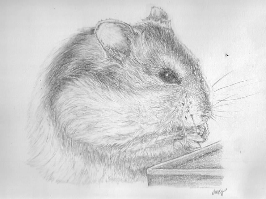 how to draw a dwarf hamster hamster drawing google search drawings cute hamsters dwarf hamster how to draw a