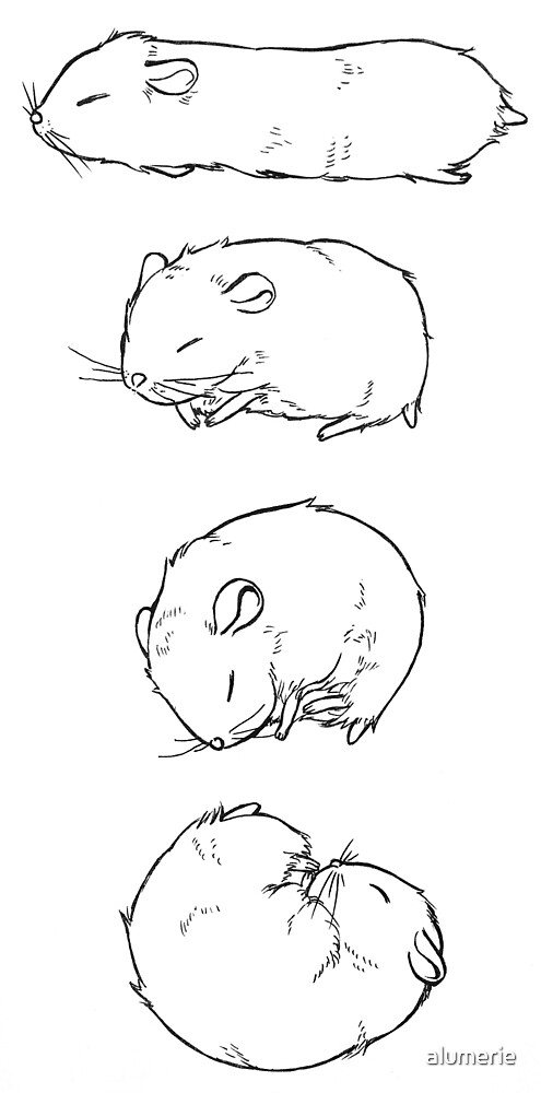how to draw a dwarf hamster how to draw a hamster dwarf hamster mediapets how draw a to dwarf hamster