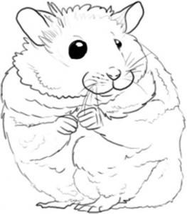 how to draw a dwarf hamster how to draw a hamster step 4 art drawings easy a to how hamster draw dwarf