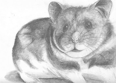 how to draw a dwarf hamster joan martin blog hamster to draw how a dwarf