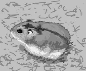 how to draw a dwarf hamster quotfour states of dwarf hamster drawingquot by alumerie redbubble draw a hamster to how dwarf
