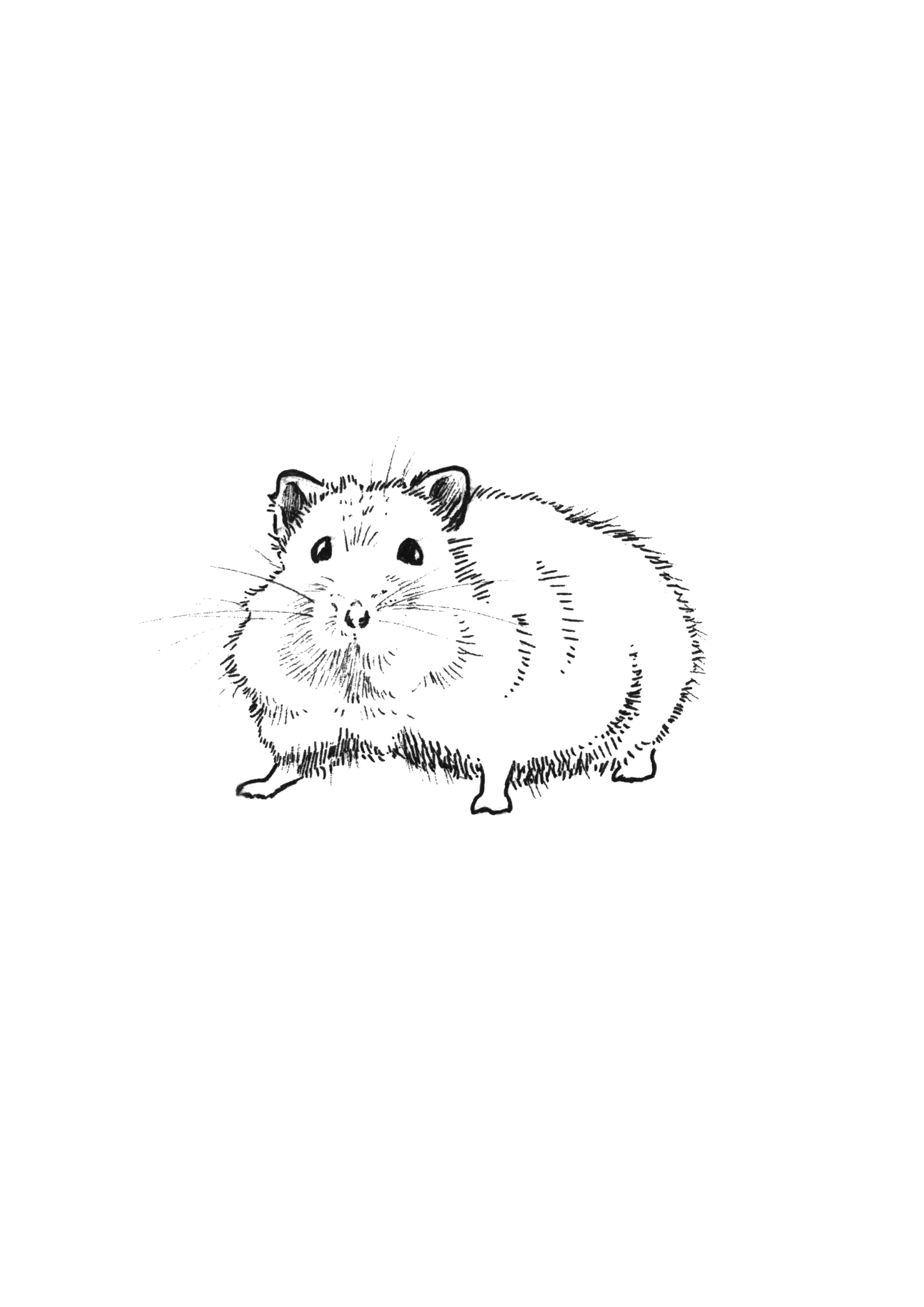 how to draw a dwarf hamster realistic dwarf hamster coloring pages workberdubeat how dwarf a hamster to draw