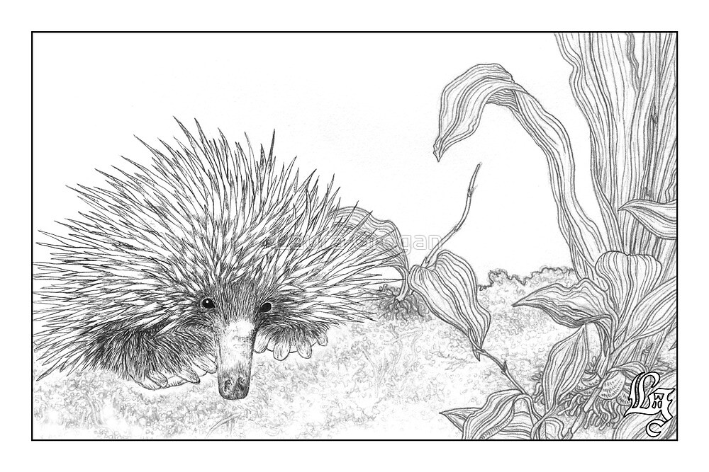 how to draw a echidna best echidna illustrations royalty free vector graphics a how draw to echidna