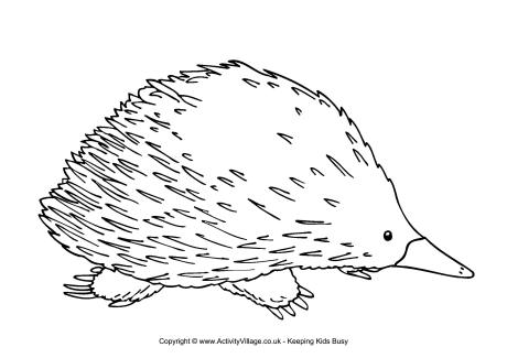 how to draw a echidna cute short beaked echidna coloring page free printable echidna draw a how to
