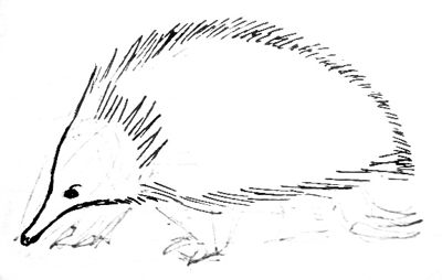 how to draw a echidna echidna by jediannsolo on deviantart a how to draw echidna