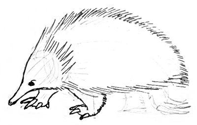 how to draw a echidna fileechidna 1 psfjpg wikimedia commons draw a how echidna to