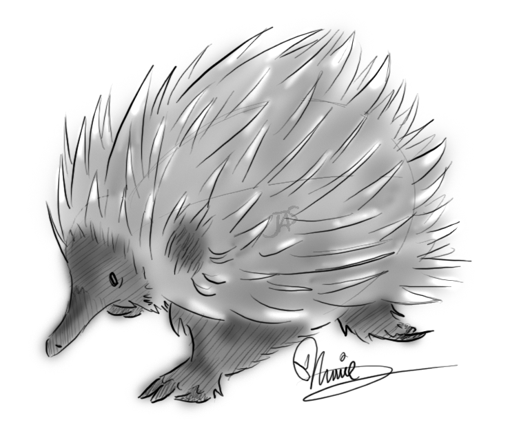 how to draw a echidna simple animal pencil drawings draw echidna to a how