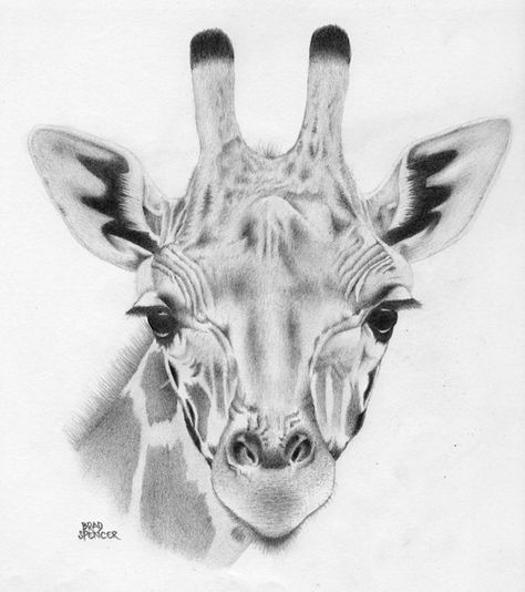 how to draw a giraffe face baby giraffe art print also available printed on draw giraffe to how a face