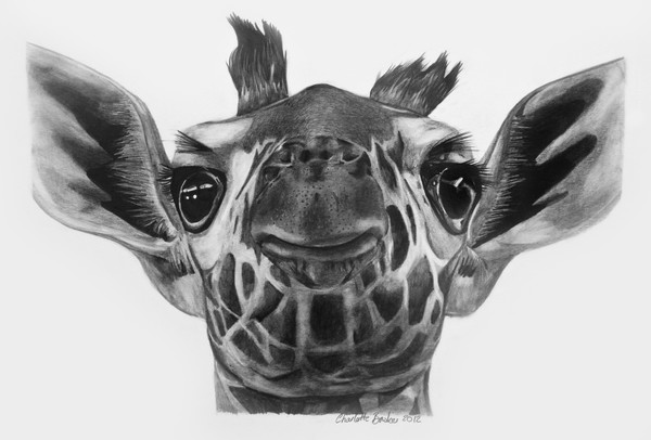 how to draw a giraffe face gallery for gt pencil drawings of giraffes applique quilt how a face to giraffe draw