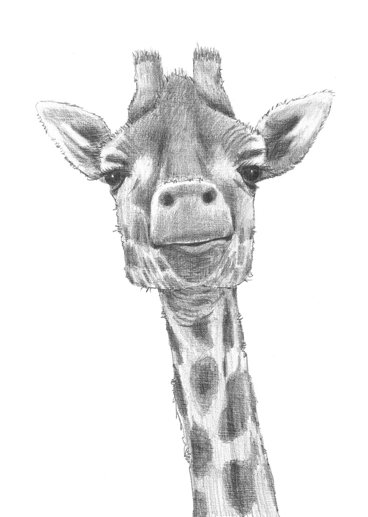 how to draw a giraffe face giraffe by bymichaelxdeviantartcom on deviantart how draw giraffe face a to