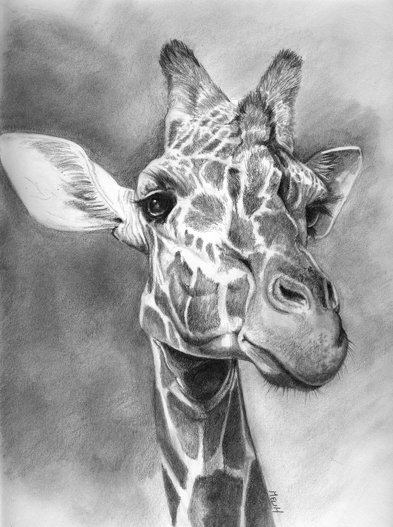 how to draw a giraffe face giraffe face drawing at paintingvalleycom explore how a to draw face giraffe