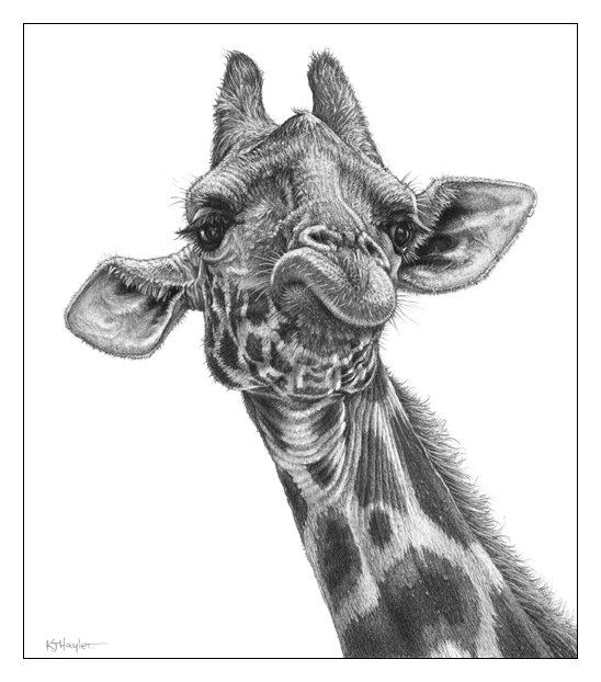 how to draw a giraffe face giraffe ii by bymichaelx on deviantart animalart art face draw to a giraffe how