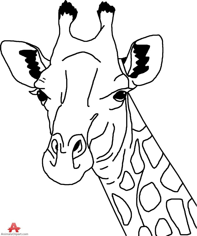 how to draw a giraffe face giraffe line art clipartsco how a face to giraffe draw