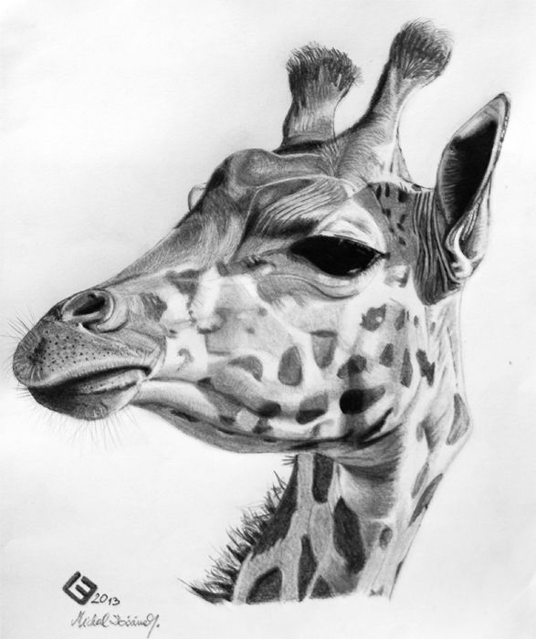how to draw a giraffe face giraffe pencil drawing google search drawings draw to face how giraffe a