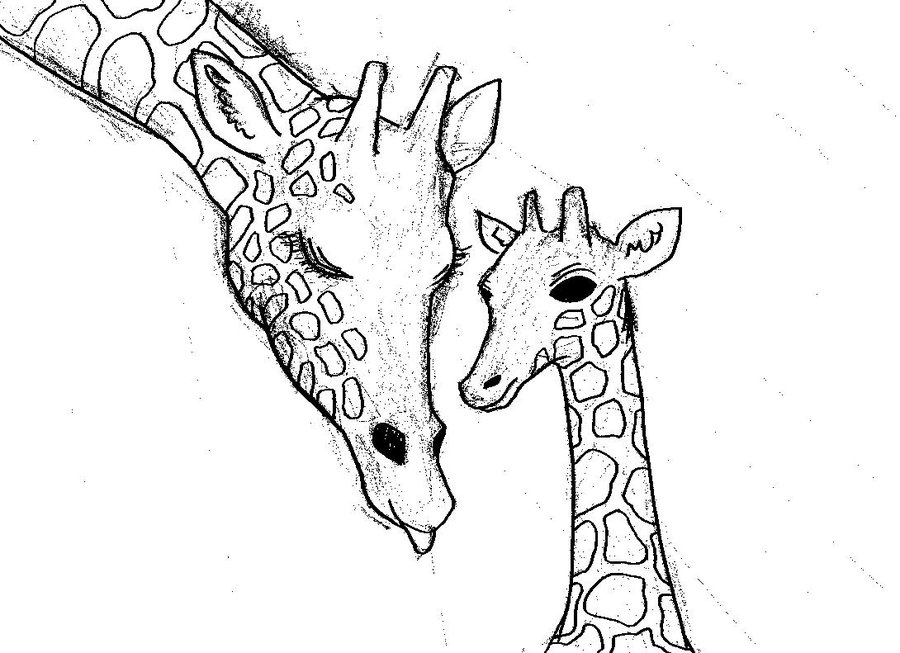 how to draw a giraffe face items similar to giraffe eating original pencil drawing a giraffe how draw face to