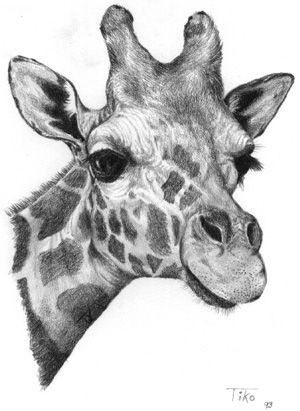 How to draw a giraffe face