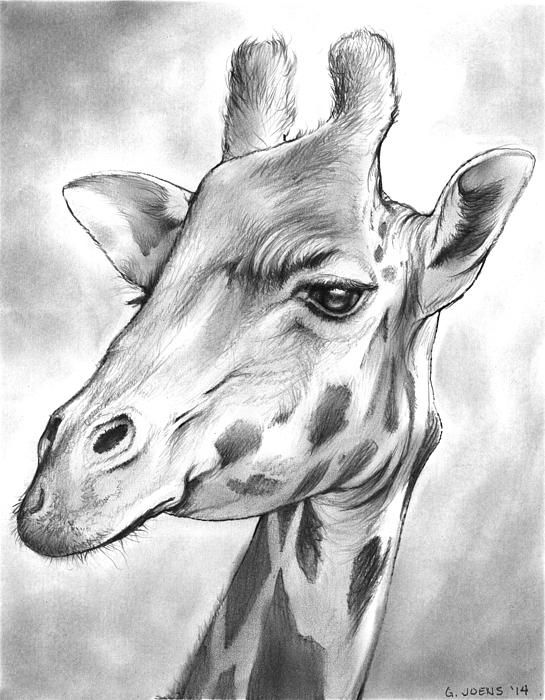 how to draw a giraffe face wildlife drawings pesquisa do google with images face draw a how giraffe to