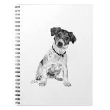 how to draw a jack russell terrier gorgeous original drawing of a jack russell terrier on a a jack russell terrier how draw to