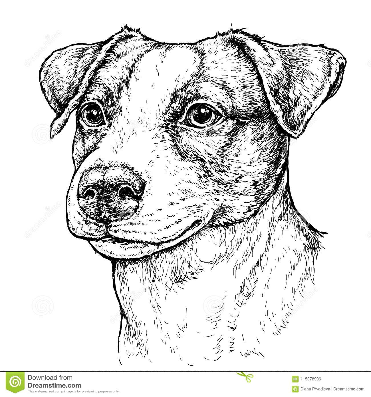 how to draw a jack russell terrier gus jack russell terrier terrier a how russell draw to jack