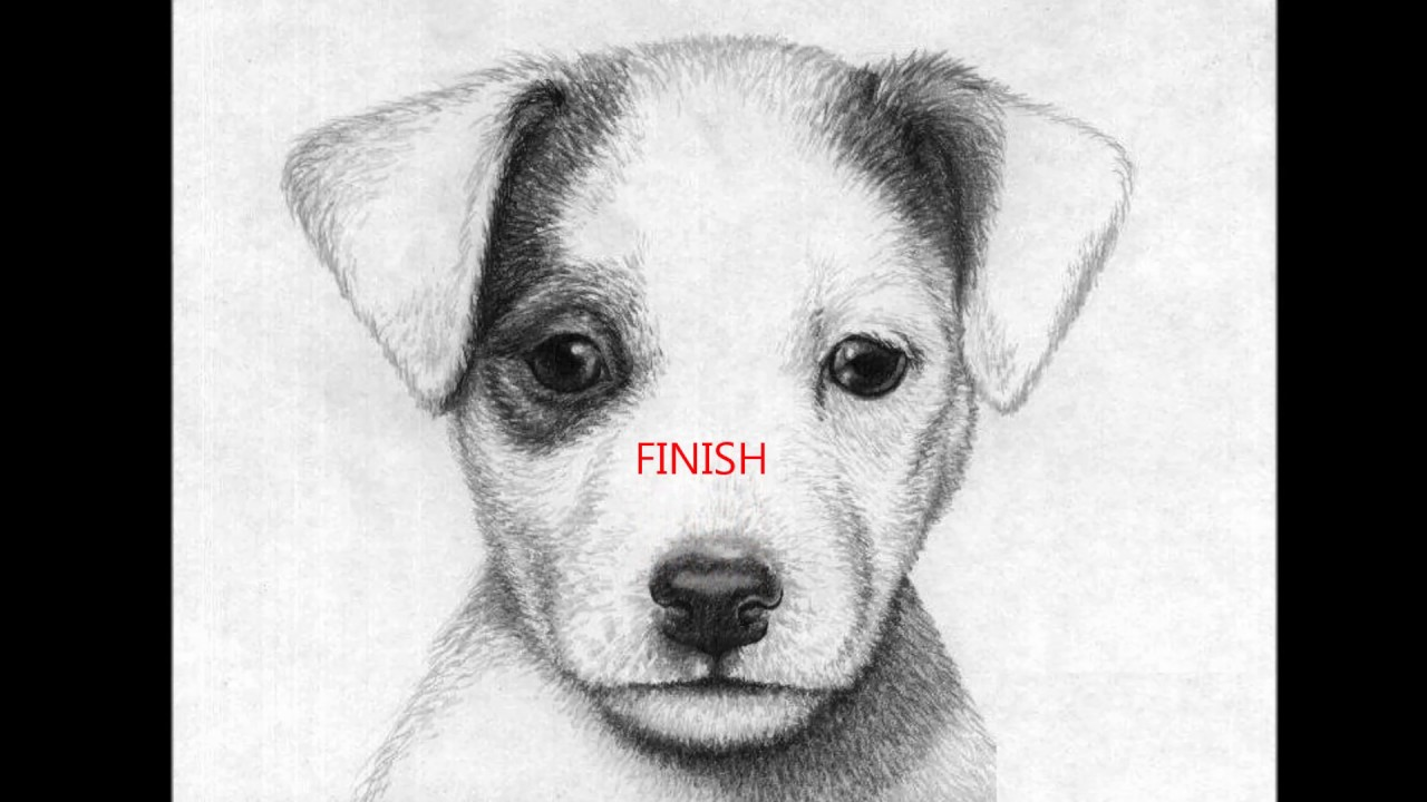how to draw a jack russell terrier jack russell dog pencil by frozenpinky on deviantart to jack draw russell a how terrier