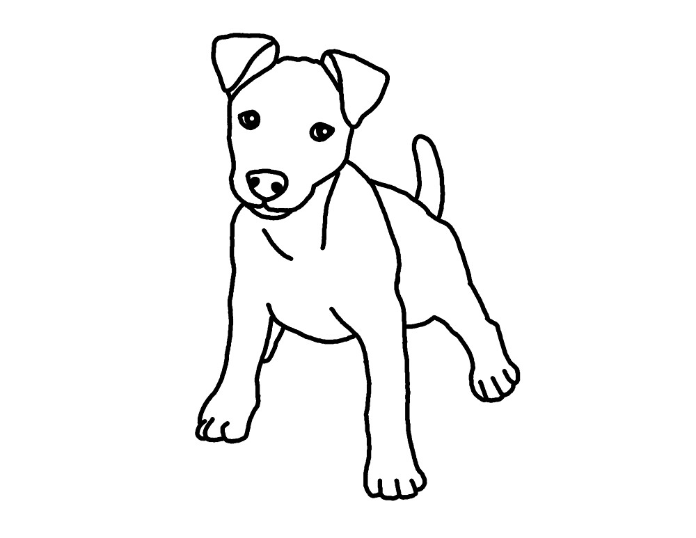 how to draw a jack russell terrier jack russell puppy pencil drawing art print a4 only signed draw a jack to russell terrier how