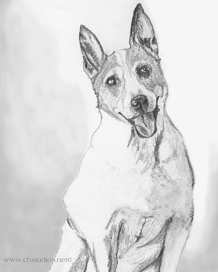 how to draw a jack russell terrier jack russell terrier drawing at getdrawings free download to how terrier draw russell jack a