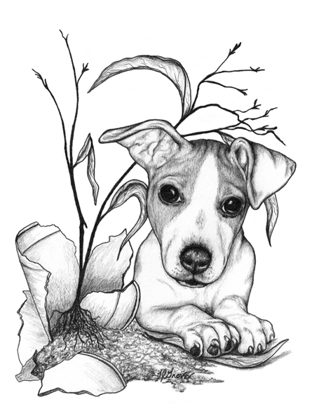 how to draw a jack russell terrier jack russell terrier drawing at getdrawings free download to russell jack how draw a terrier