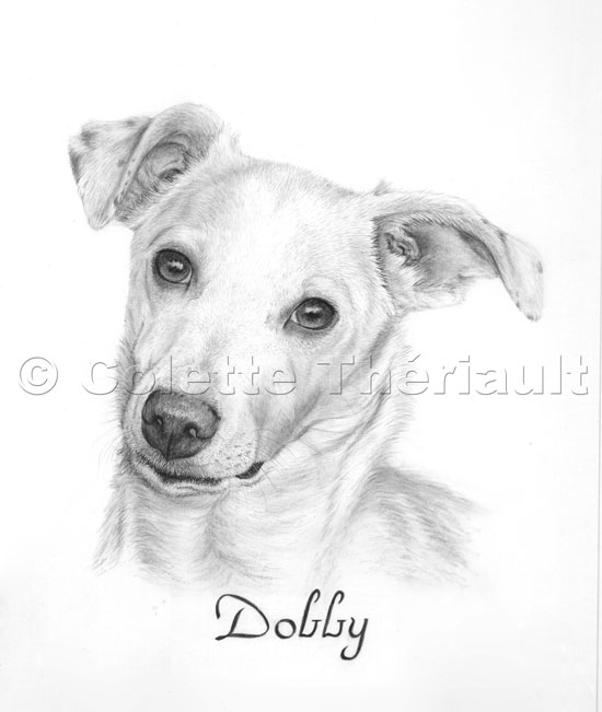 how to draw a jack russell terrier jack russell terrier drawing at paintingvalleycom a jack to russell how draw terrier