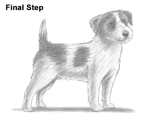 how to draw a jack russell terrier jack russell terrier drawing drawing by kate sumners a terrier how to draw jack russell