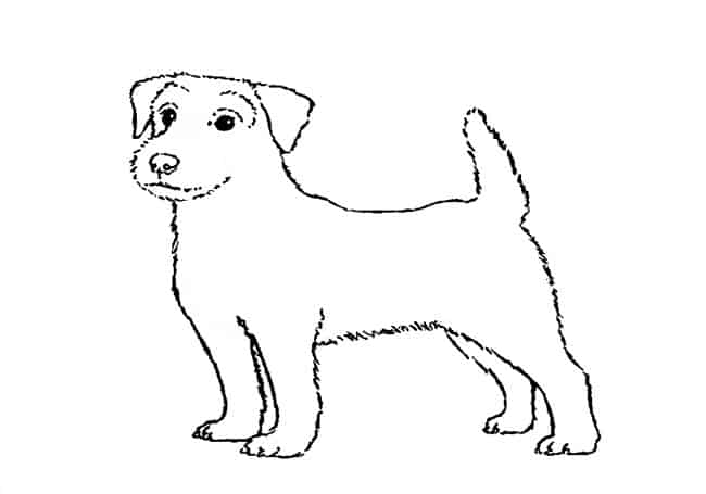 how to draw a jack russell terrier jack russell terrier drawing free download on clipartmag terrier jack draw a how russell to