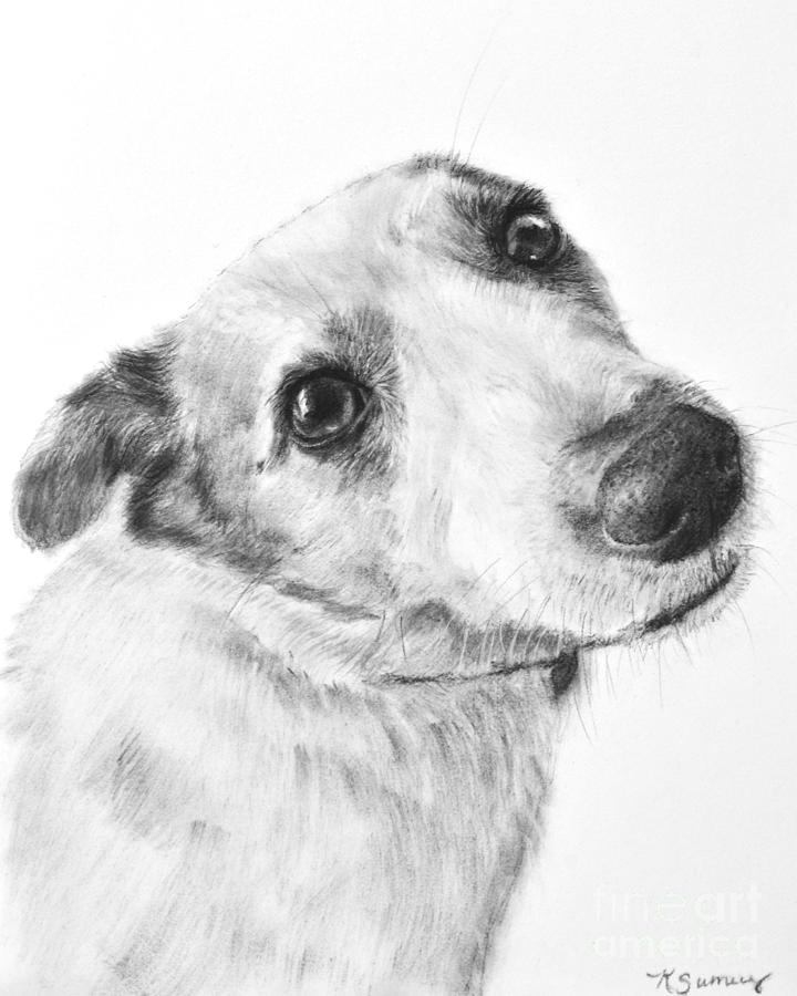 how to draw a jack russell terrier pencil drawing of a jack russell terrier by uk artist gary a how russell draw to jack terrier