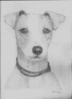 how to draw a jack russell terrier rough coat jack russell terrier and pup drawing by barbara a draw jack terrier to how russell
