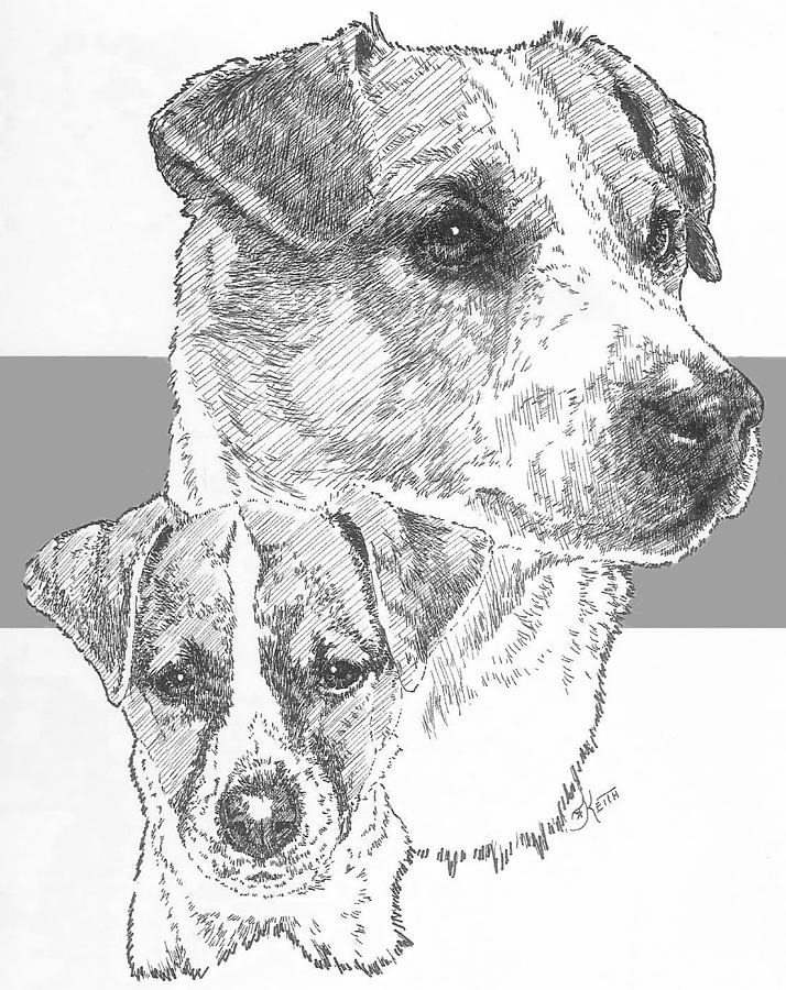 how to draw a jack russell terrier vector sketch dog jack russell terrier breed stock vector jack to russell how a draw terrier