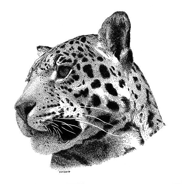 how to draw a jaguar easy jaguar drawing at paintingvalleycom explore a to jaguar how draw