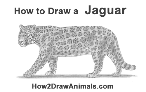 how to draw a jaguar gallery easy jaguar drawings a draw to jaguar how