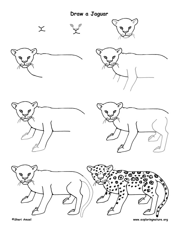 how to draw a jaguar how to draw a jaguar to jaguar draw how a