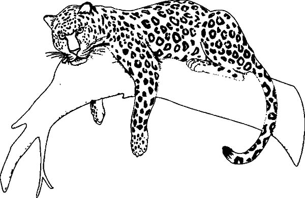 how to draw a jaguar how to draw jaguar easy step by step tutorial for kids to how draw jaguar a
