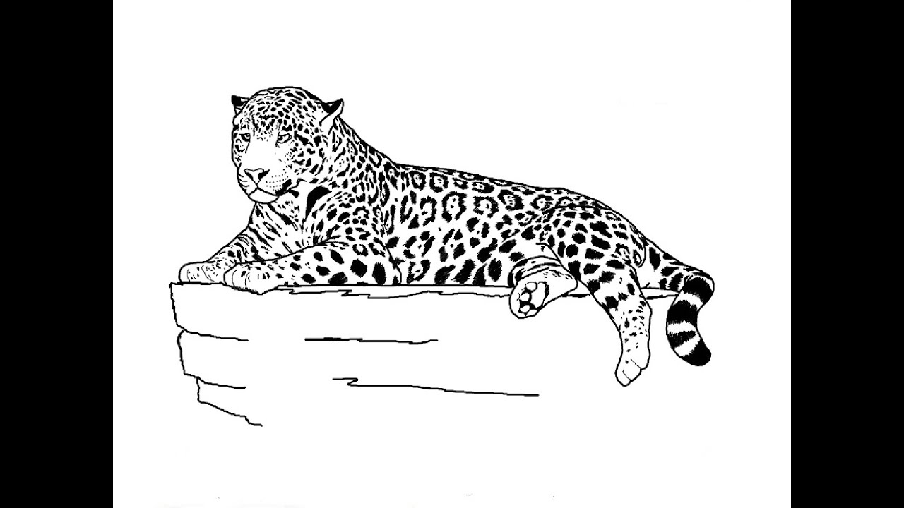 how to draw a jaguar how to draw jaguar pictures jaguar step by step drawing draw to a how jaguar